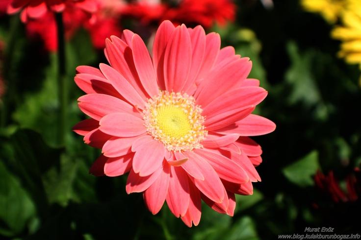 Kilyos     http://www.blog.kulakburunbogaz.info/Kilyos.html