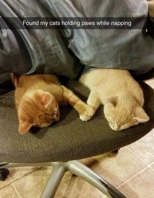 Aww this reminds me of when my Winnie and Violet would put their heads together … – Katzen