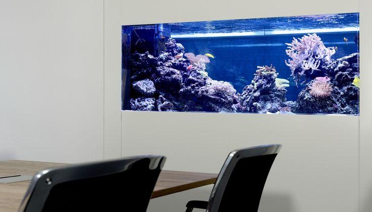 Meerwasser-Aquarium Raumteiler  #Aquariummuenchen #aquariumbaumünchen #aquariumwartung