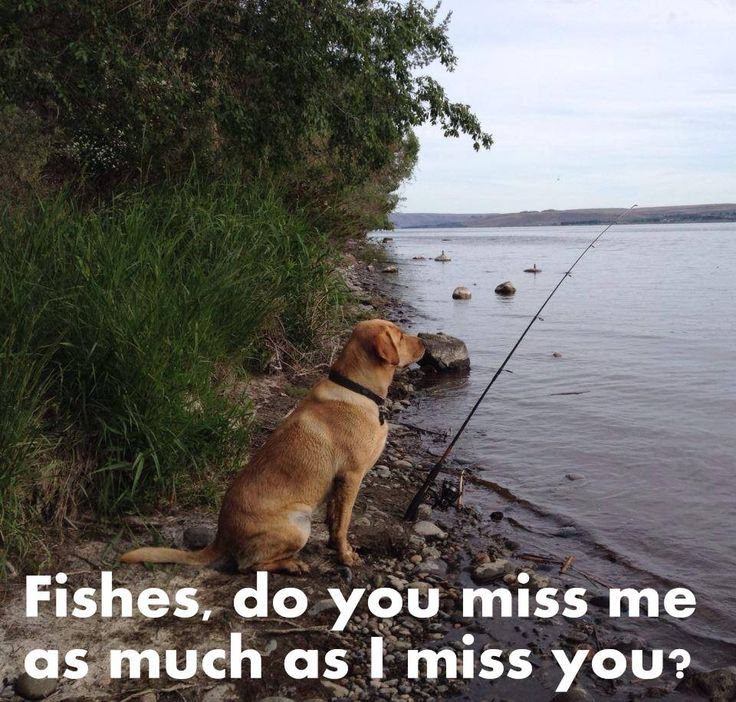 Fishes, do u miss me as much as I miss u? #dogfishing