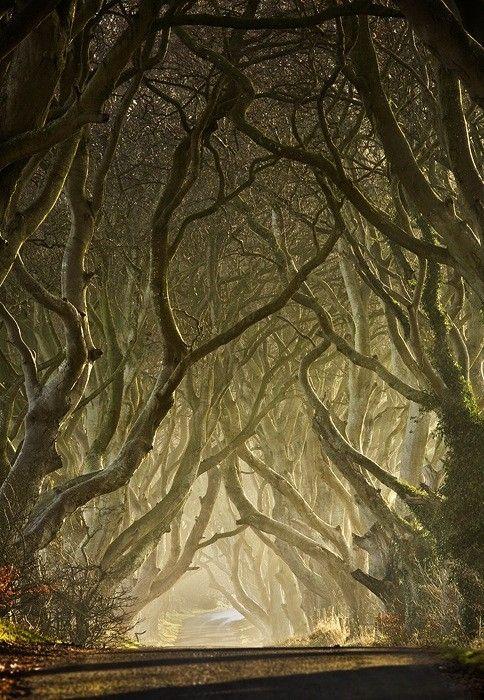 The Dark Hedges, Antrim, Nothern Ireland