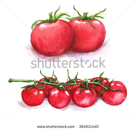 Hand-drawn watercolor illustration of the red tomatoes and cherry tomatoes.  Drawing isolated on the white background