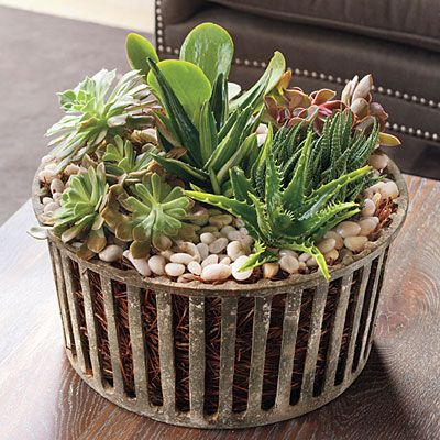 Houseplants: Love this Succulent Arrangement