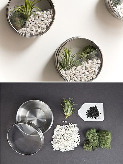DIY Magnetic Terrarium—Create your own vertical garden!