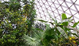 Bloedel Conservatory | City of Vancouver