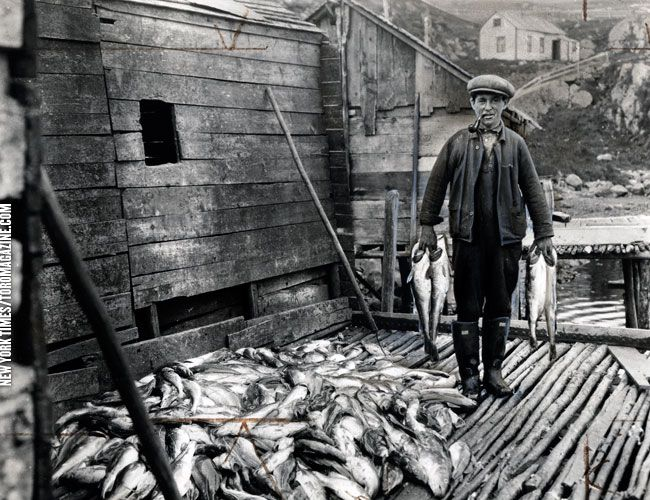 Newfoundland Fisherman 1936