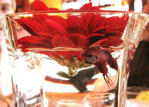 beta fish wedding centerpieces   Betta Centerpiece , originally uploaded by Arwyn J.M. .