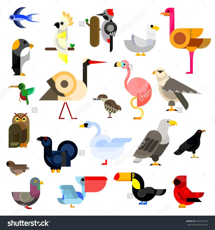 Owl And Eagle, Swallow And Hummingbird, Parrot, Falcon, Penguin, Stork, Swan, Sparrow, Pigeon, Flamingo And Gull, Ostrich, Raven, Pecker, Toucan, Cardinal, Pelican, Blackcock, Kiwi Birds Flat Icons Stock Vector Illustratie 443607742 : Shutterstock