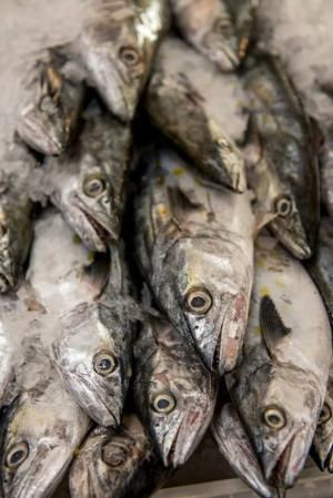 Top Places to Buy Fresh Seafood Online: Isaacson & Stein Fish Company