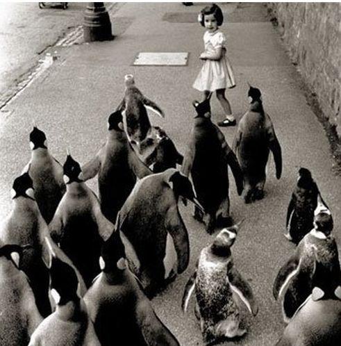 penguins! i love Penguins~!!