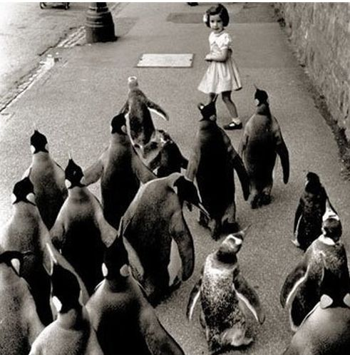 50 Unexplainable Black & White Photos: Little Girls, That Girls, Black White, Penguins, The Zoos, Follow Me, Vintage Photo, Dreams Coming True, Old Photographers
