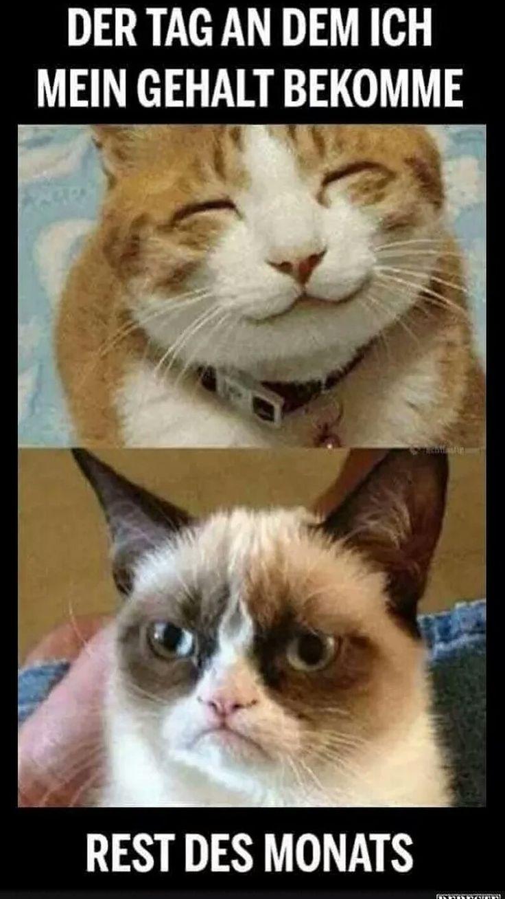 Amazing Das ist Peter Peter ist beleidigt weil Schila ihn einfach nicht findet Grumpy Cat