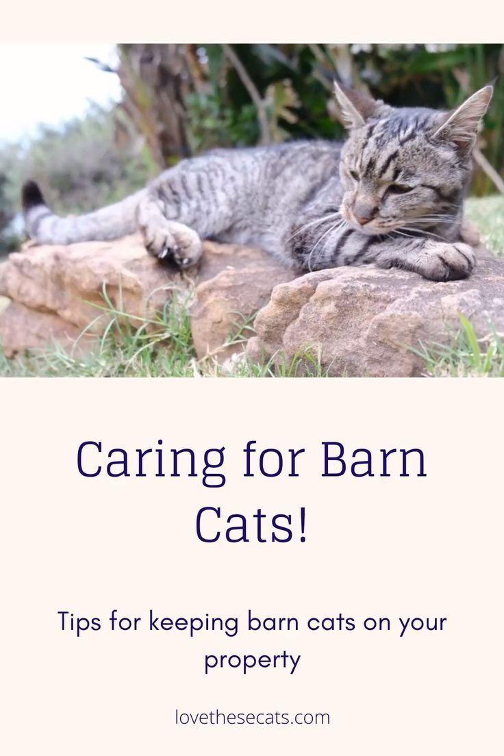 Barn Cats Care In 2020 Cats Cat Care Kitten Care