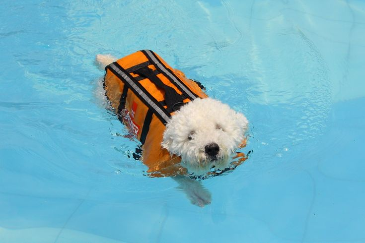 Best 25 Dog Swimming Pools Ideas On Pinterest Dog Pools Underwater Dogs And Walk In Pool