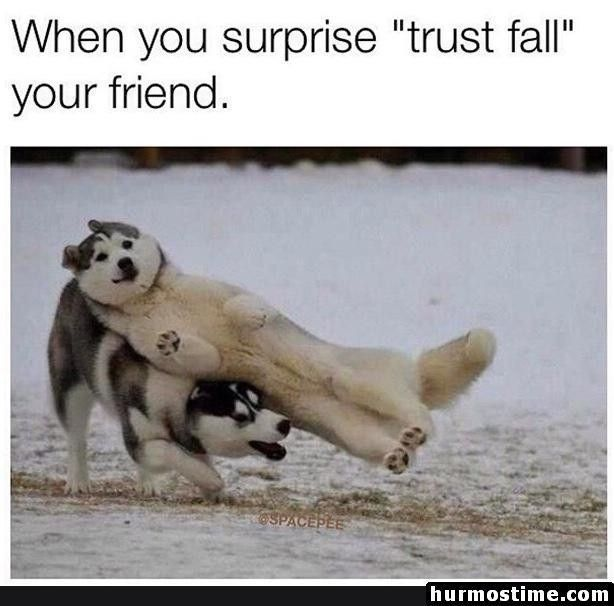 60 New Hot Funniest Dog Memes To Welcome 2020 Funny Animal Memes Funny Dog Memes Dog Quotes Funny