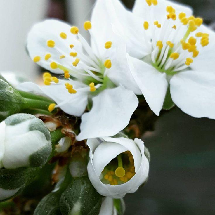 "6 aprecieri, 1 comentarii - Irina Tania (@irina.tania2004) pe Instagram: ""#flowers  #treesblooming #beautiful"""