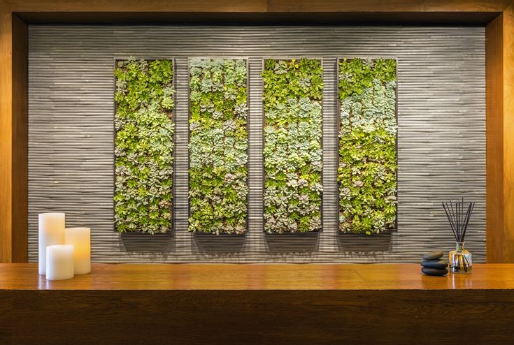 The Living Wall at the Spa Anjali Front Desk.