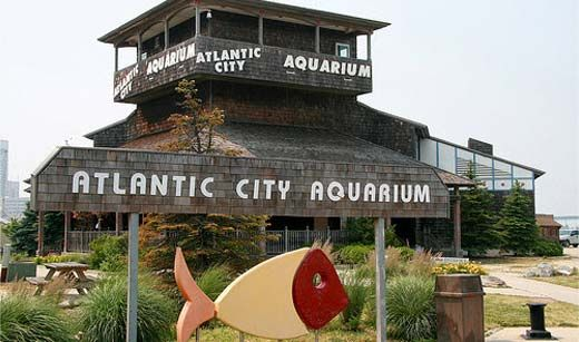 Atlantic City Aquarium ~ Atlantic City, NJ.  Loved this place!  Expected mediocrity-got WOW!!!!!!***