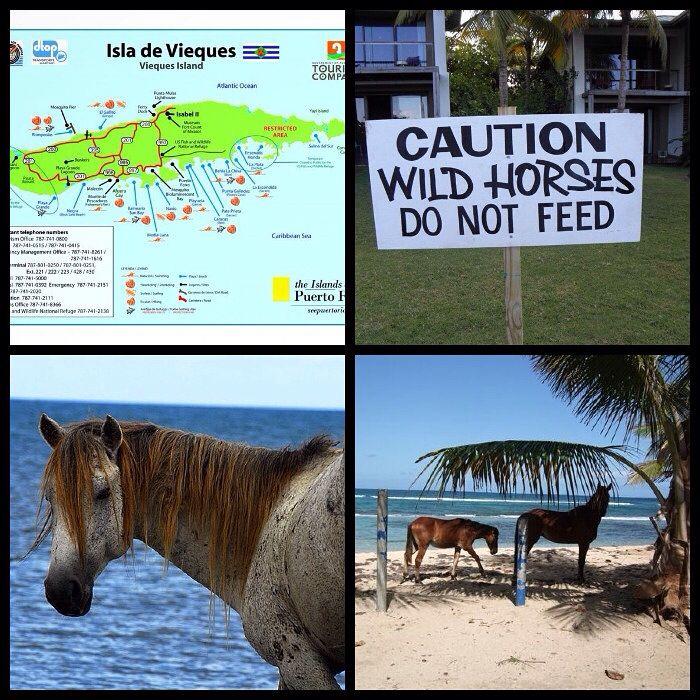 Noticias > News Puerto Rico Wild-Horse's  Inician plan para controlar caballos abandonados en Vieques   http://m.primerahora.com/noticias/puerto-rico/nota/inicianplanparacontrolarcaballosabandonadosenvieques-1200140/   https://www.youtube.com/watch?v=-ysB_CF3lsc&sns=em