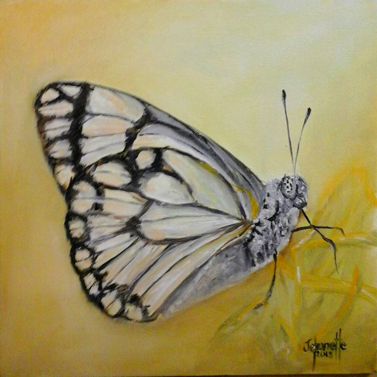 227Skoenlapper Stretched Canvas 300x300x40mm