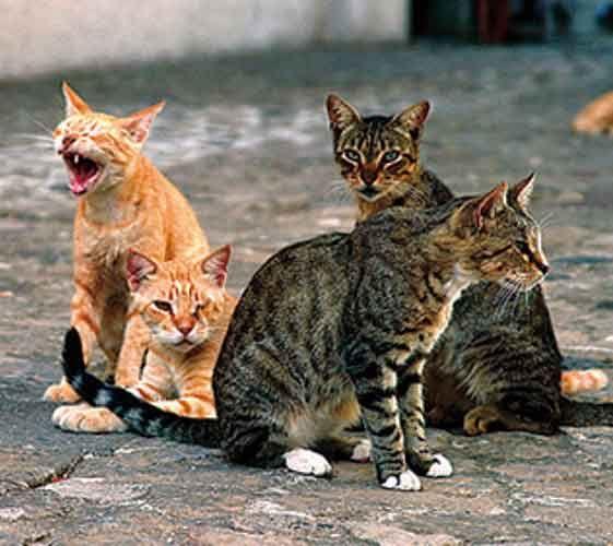 Ben je opzoek naar hulp of wil je een ervaring delen met andere kattenbezitters. De katten communitie helpt kattenliefhebbers communiceren met andere mensen die een huiskat hebben.