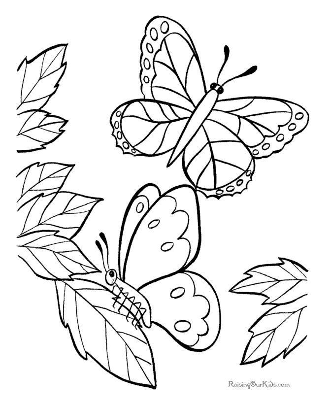 butterfly coloring page - Free Color Book Pages