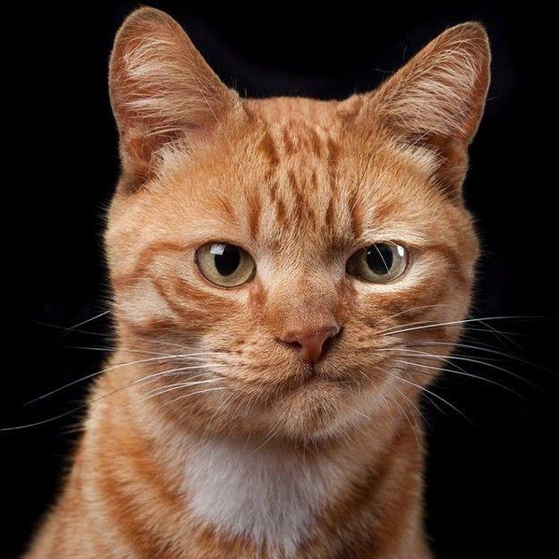 Összegyűjtöttük a világ legkedveltebb macskáit, amik sokszínűségnek örvendnek.