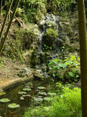 Waterfall at Orchid World & Tropical Flower Garden in Barbados