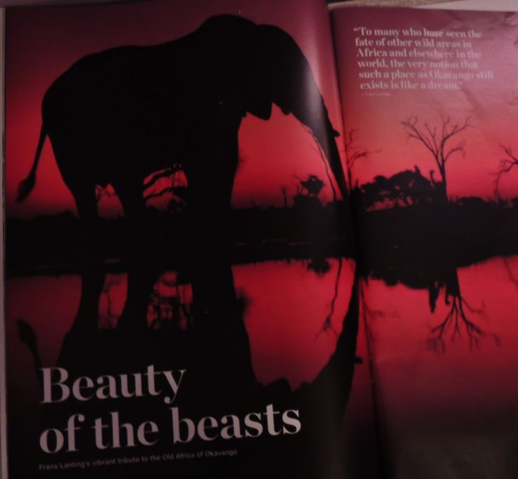 Twilight of the giants: living monuments of the African bush, elephants move as unhindered trough the night as they do by day.