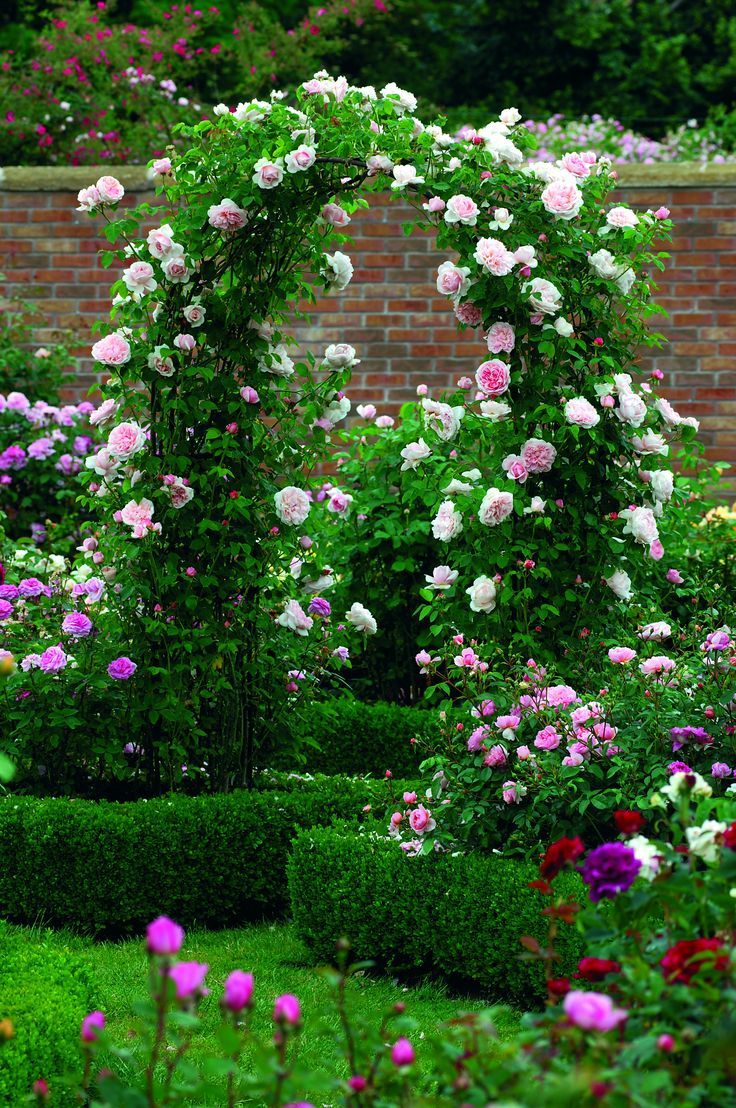 Most Beautiful Rose Gardens In The World top 25+ best roses garden ideas on pinterest | growing roses