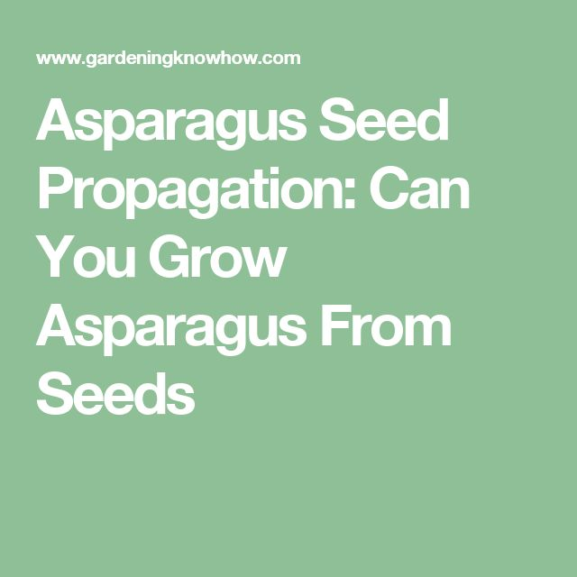 Asparagus Seed Propagation: Can You Grow Asparagus From Seeds