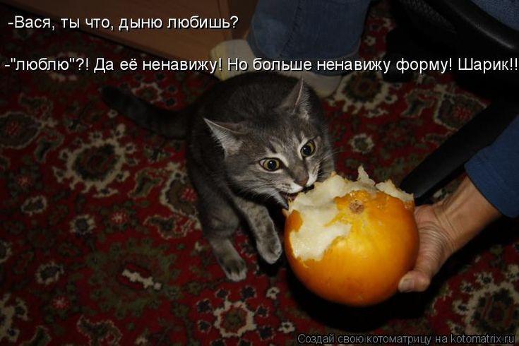 """-""""люблю""""?! Да её ненавижу! Но больше ненавижу форму! Шарик!!! -Вася, ты что, дыню любишь?"""