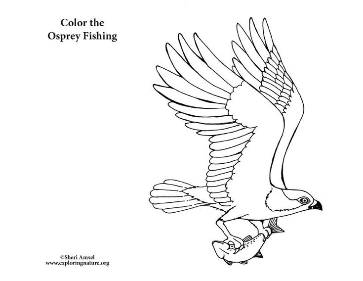 17 best Color Birds images on Pinterest | Birds, Coloring books and ...