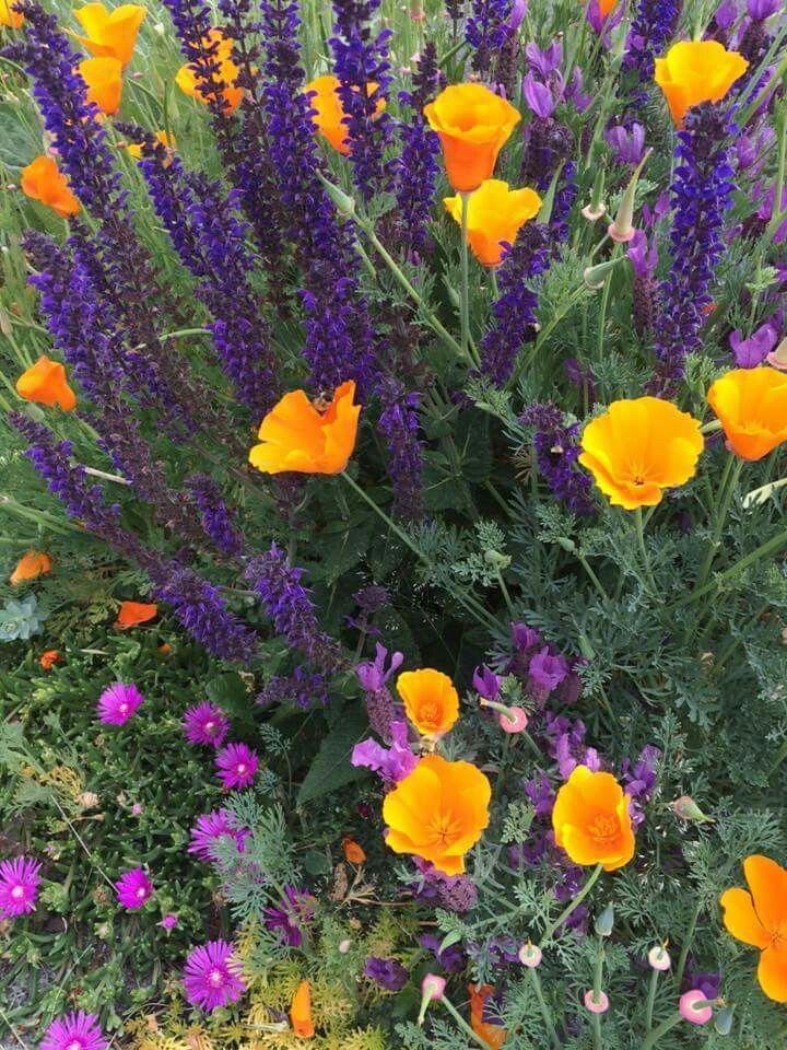 Trockenresistente Blüten – Pflanzen im Freien
