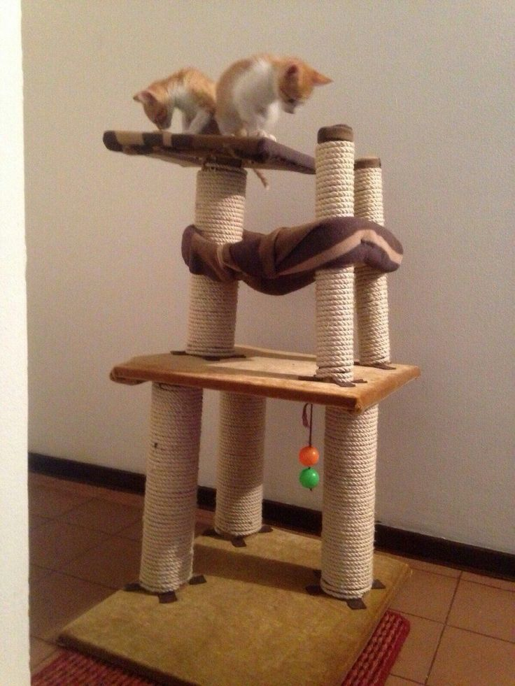 Gimnasio para gatos lila pinterest gimnasio para - Como hacer un gimnasio ...