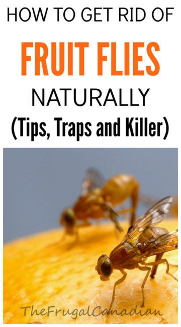 How To Get Rid Of Fruit Flies Naturally, DIY Homemade Fruit Fly Trap
