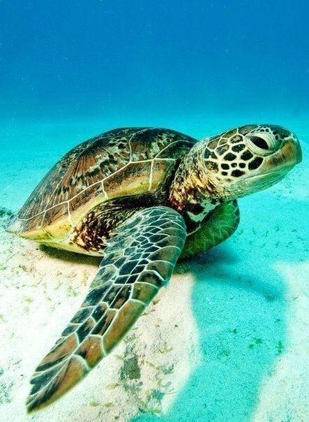 #sea #tortoise #summer .... Push and choose...Image 1 of 30