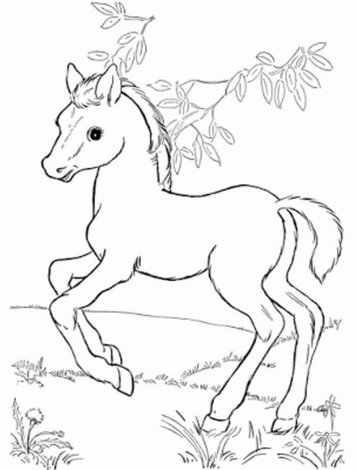 Horse Coloring Pages For Teens Horse Coloring Pages Animal Coloring Pages Horse Coloring