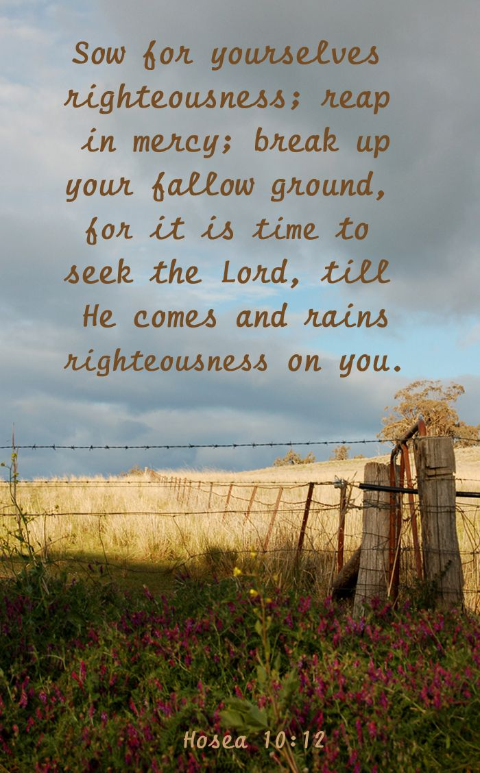 "Hosea 10:12 ~ ""Sow for yourselves righteousness; reap in mercy; break up your fallow ground, for it is time to seek the Lord, till He comes and rains righteousness on you."" ~ "" ... IT IS TIME TO SEEK THE LORD ..."""