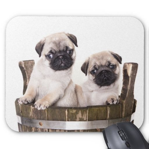 Cute Pug Puppy Dog in Wooden Crate Barrel Mousepad by alwaysdogs