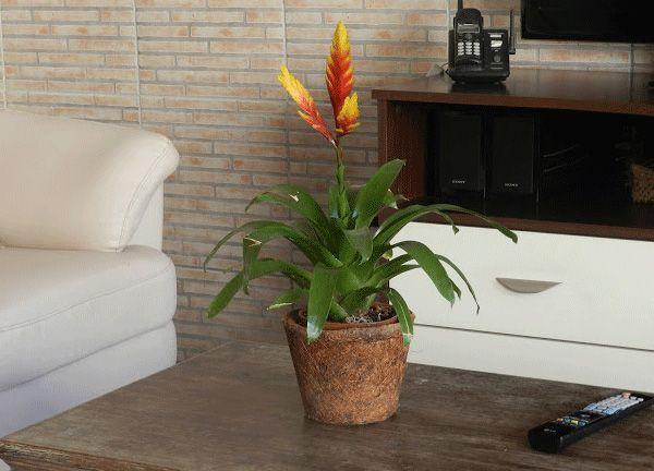 A Decoração de Ambientes internos com plantas pode ser feita com muita criatividade, inspire-se nos modelos e fotos para criar um ambiente lindo.