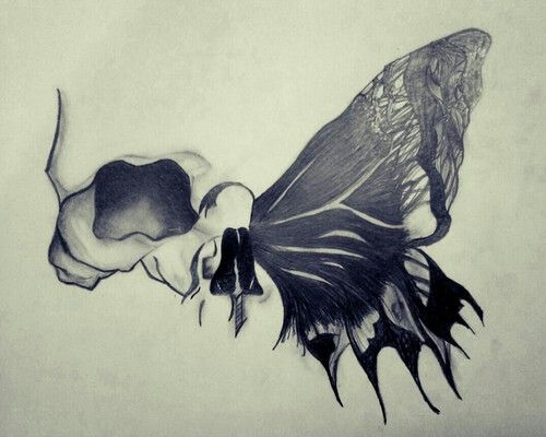 Beautifull half skull mixed with a butterfly