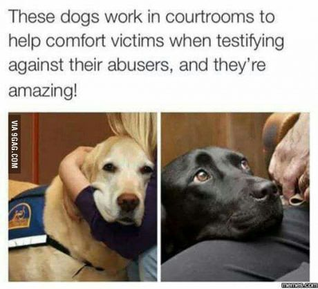 It is true. Canine Partners for Life has placed a couple of courthouse dogs in Pennsylvania.