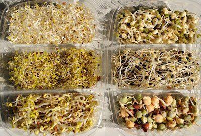 Saját termés reggelire: Csíráztatás otthon