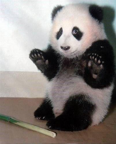 1289711982_no-fear-kungfu-panda