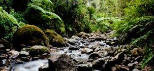 Nau mai ki Te Taura Whiri i te Reo Māori - Māori Language Commission