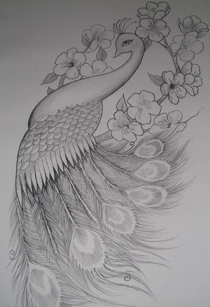 How To Draw A Peacock Feather Peacock Feather Drawing Pencil
