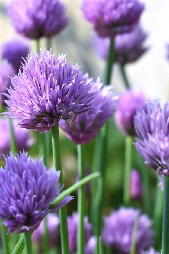 Gardening John 397 20190425190842 53 Olive Garden Which Was Lovely