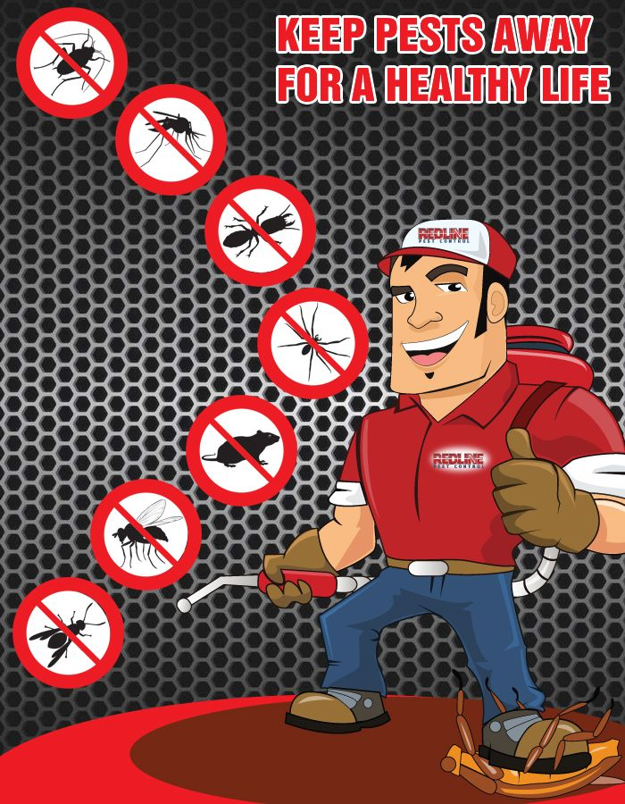 Effective Termite Pest Control in Parramatta and Inner West | Venngage - Free Infographic Maker
