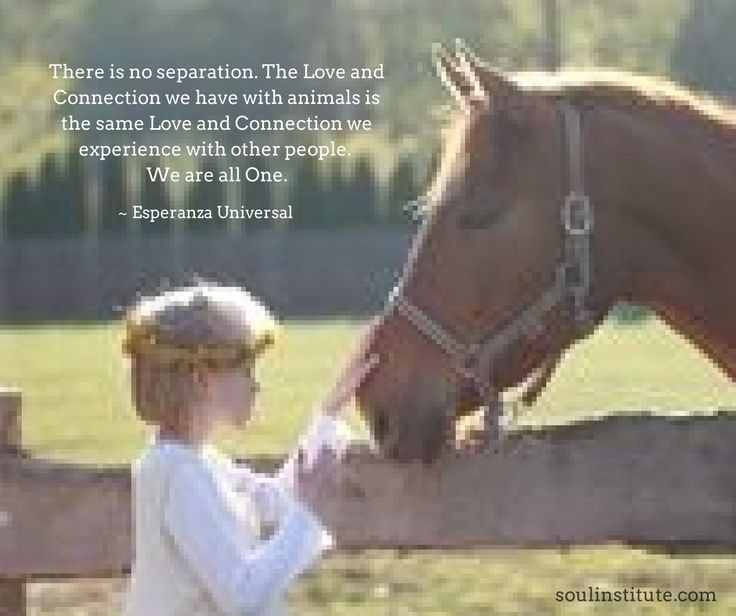 join the conversation on facebook.com/soulinstitute for more beautiful quotes and posts <3 #love #journey #spirituality #conscious #onelove #relationships #animals #pets #family